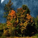 """""""Jewelled Sky"""" by RCdeWinter"""