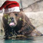"""""""Christmas Brown Bear"""" by crazyabouthercats"""