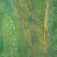 pine needles  hand painted photograph Art Prints & Posters by john nanian