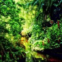 Bahamas - Tropical Paradise Art Prints & Posters by Susan Savad