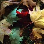 """Autumn Carpet"" by RCdeWinter"