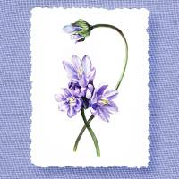 Gorgeous Purple Flowers Botanical Decorative Art Art Prints & Posters by Irina Sztukowski