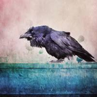 Words of a raven Art Prints & Posters by Priska Wettstein