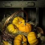 """Pumpkins in a Basket 2"" by AnnG"