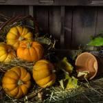 """Pumpkins in a Basket"" by AnnG"