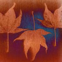 Three Maple Leaves Art Prints & Posters by Don Schwartz