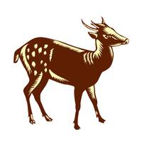 Philippine Spotted Deer Woodcut