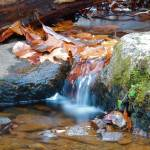 """Fall Leaves and little waterfall"" by snarkphoto"