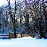 """December Ice"" by samisart"