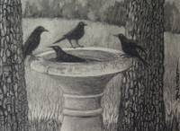 Four Crows at Birdbath charcoal fine art painting