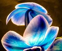 Blue Orchid Bubble