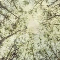 Late Summer Tree Tops Art Prints & Posters by Priska Wettstein