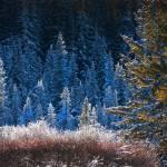 """""""Nov-Frost"""" by ArtbyDesign"""