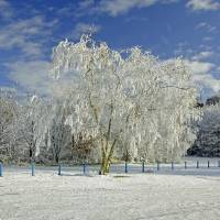 Frosted Trees, Newton Road Park Art Prints & Posters by Rod Johnson