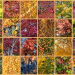 """Washington Autumn Collage"" by Groecar"