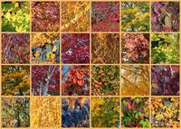 Washington Autumn Collage