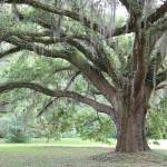 """""""Strong Southern Tree"""" by Groecar"""