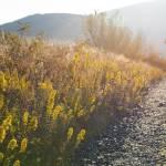 """Sunrise on Appalachian Trail"" by jcarillet"