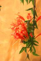 Orange Flowers Next to a Wall