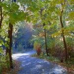"""Trails Into New Surroundings"" by artsandi"