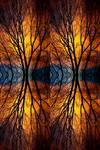 """Colorful Tree Branches Abstract  Four by James """"BO"""" Insogna"""