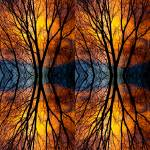 """Colorful Tree Branches Abstract  Four"" by lightningman"