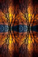 Colorful Tree Branches Abstract  Four