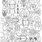 """""""Beetles"""" by lindalou2"""
