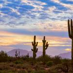 """Just Another Colorful Sonoran Desert Sunrise"" by lightningman"
