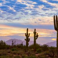 """Just Another Colorful Sonoran Desert Sunrise"" by James ""BO"" Insogna"