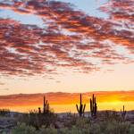 """Colorful Sonoran Desert Sunrise"" by lightningman"