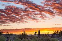 Colorful Sonoran Desert Sunrise