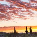 """Sonoran Desert Colorful Sunrise Morning"" by lightningman"
