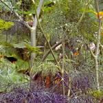 """""""Forest Below"""" by ralphnelsen"""