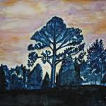"""""""The Lone Pine"""" by PaulC"""