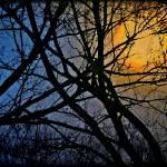 """Gold Moon, Black Trees"" by SplitWindow"