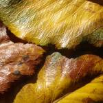"""""""Autumn Color"""" by winrow"""