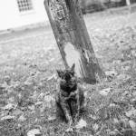 """Cemetery Cat"" by WildAboutNaturePhotography"