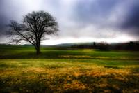 Tree Alone In A Field