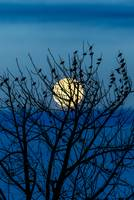 Full Moon and perching birds