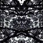 """ABSTRACT ANSON ROAD TREE #100, EDIT C"" by nawfalnur"