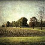 """Grungy Farm"" by LouiseReeves"