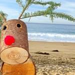"""Reindeer 1 on the Beach"" by robertmeyerslussier"