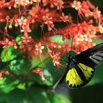 """""""Beautiful Flowers Beautiful Butterfly b"""" by Groecar"""