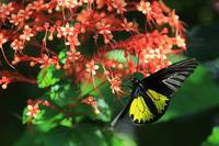 Beautiful Flowers Beautiful Butterfly b