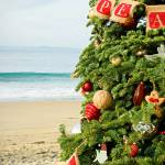 """Crystal Cove Beach Christmas Still Life"" by robertmeyerslussier"