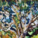 Eucalyptus Tree In The Park by RD Riccoboni