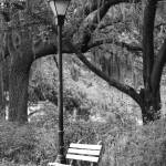 """Savannah Bench in Black and White"" by Groecar"