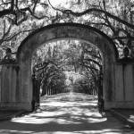 """Wormsloe Welcome - Black and White"" by Groecar"