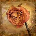 """Rose"" by JessicaJenney"